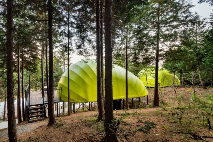 a green pod in a forest