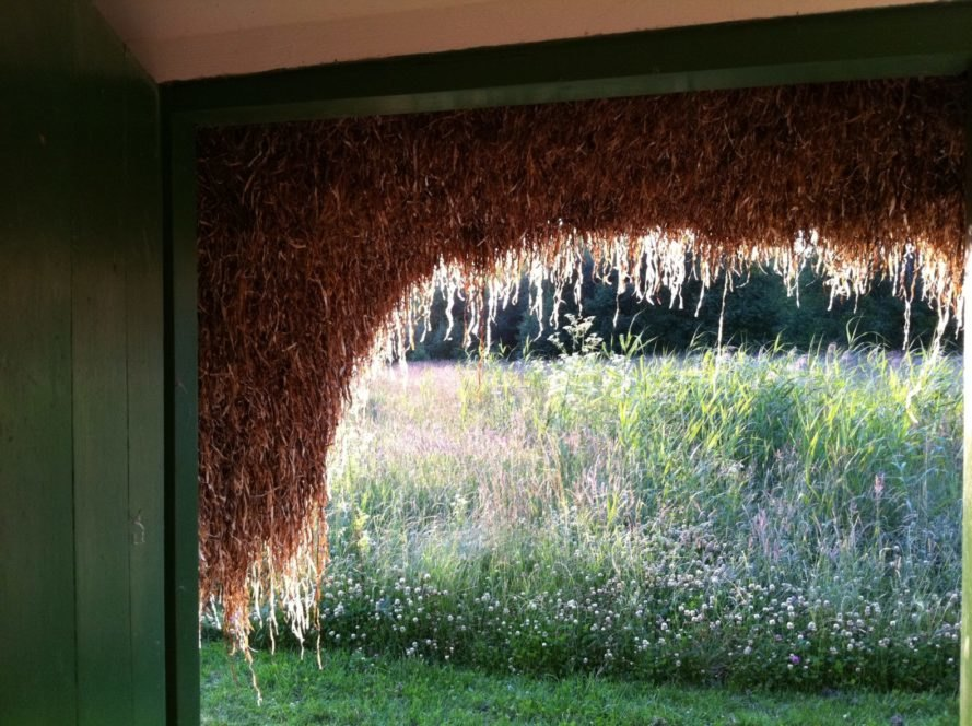interior window with seaweed hanging down