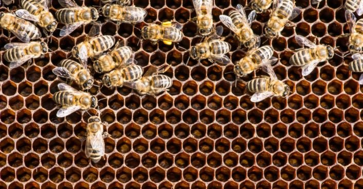 photo image Beekeepers file a complaint against Bayer after glyphosate was discovered in honey