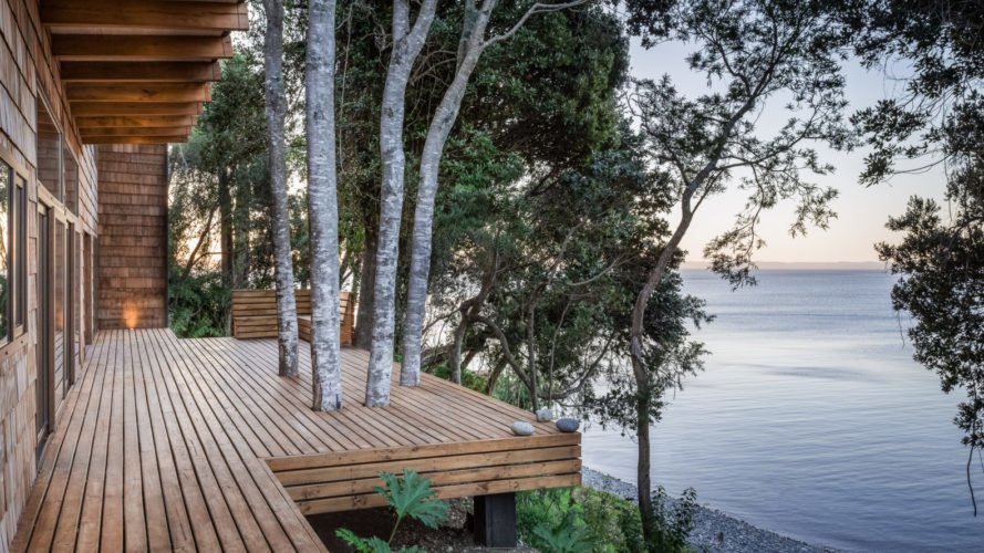 various trees growing out of a wooden deck