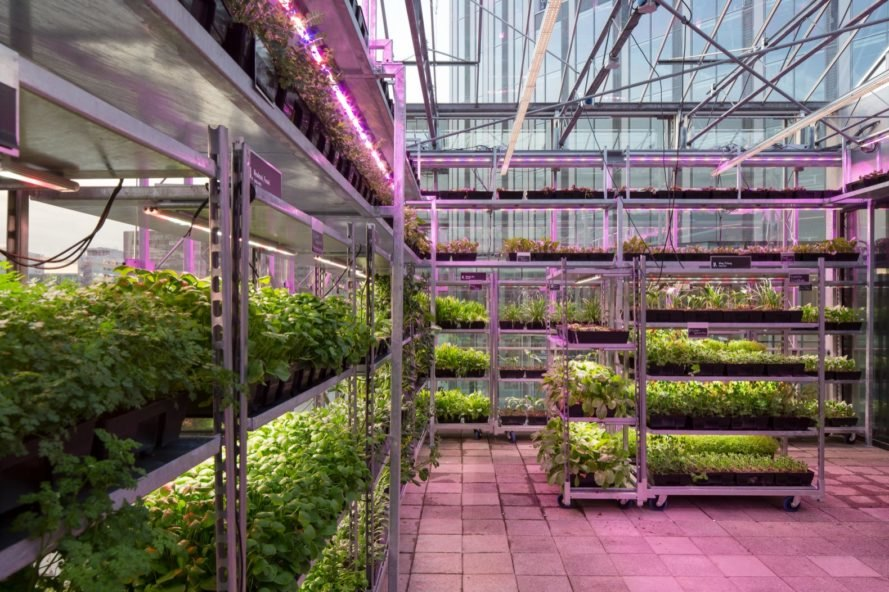 vertical farming greenhouse lit up purple