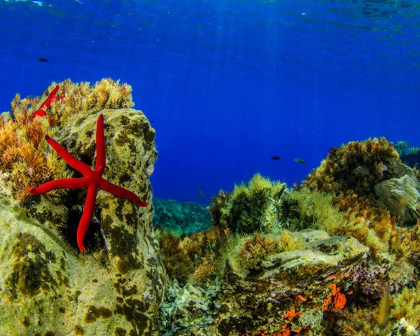 Sea star on coral