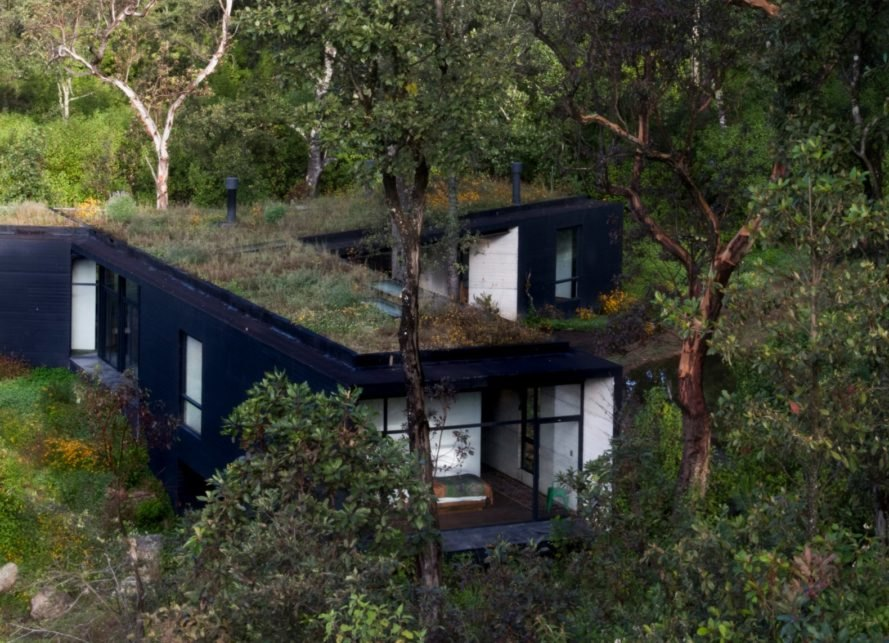 black home surrounded by greenery