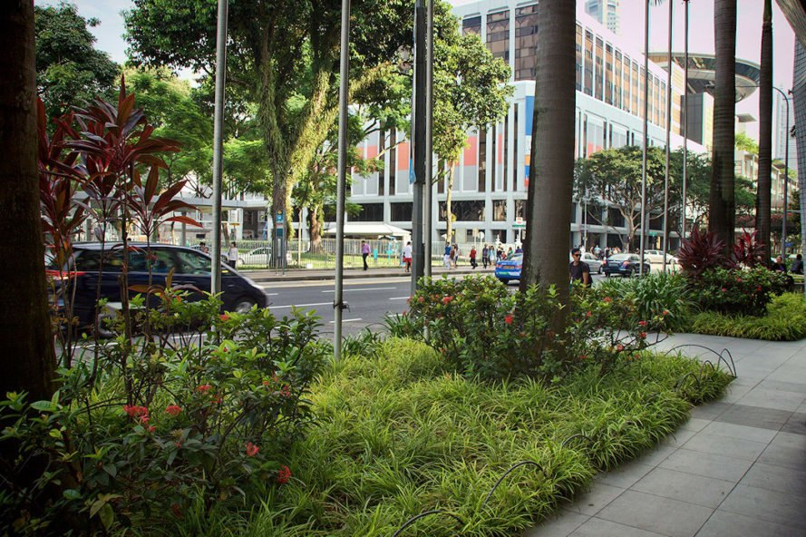 Cars driving down streets of Singapore and sidewalks with plenty of greenery and trees
