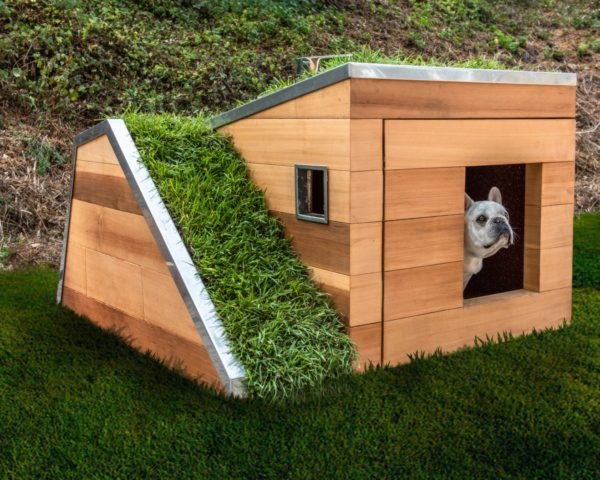 dog house with green roof and ramp
