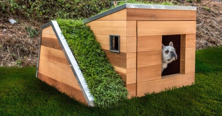 Solar Powered Sustainable Dog House With A Green Roof