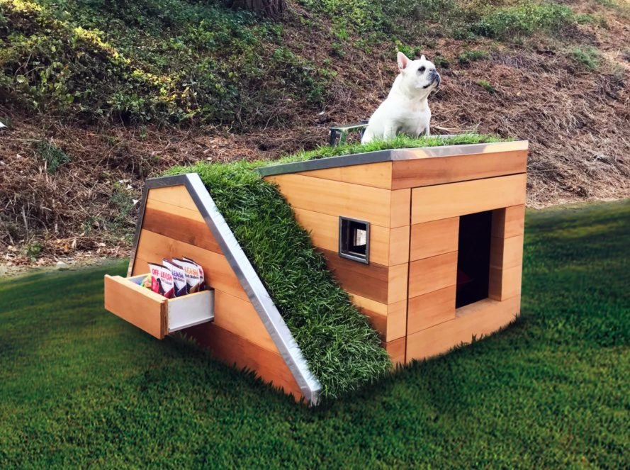 dog sitting on green-roofed dog house