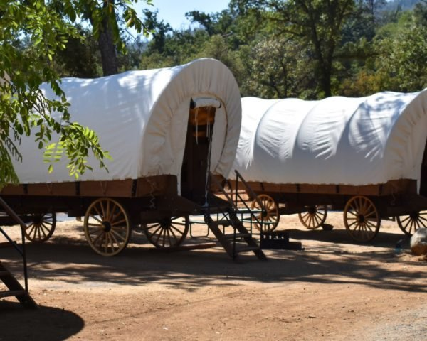 three large covered wagons in a row