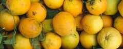 Cropped close-up of scarred and discolored lemons