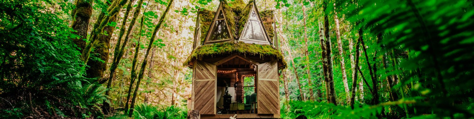 small cabin surrounded by greenery