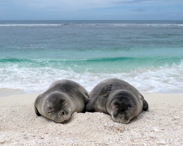 seal pups on beach