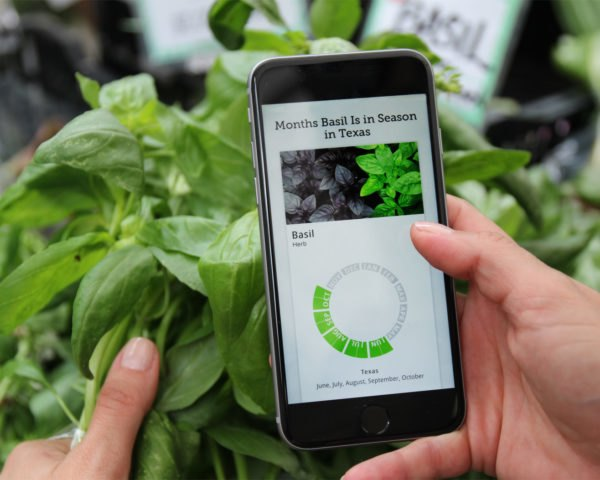 person holding phone with Seasonal Food Guide app on screen and basil in background