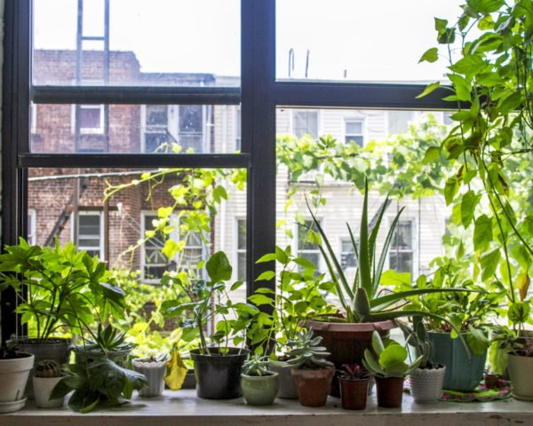 several potted plants on a windowsill