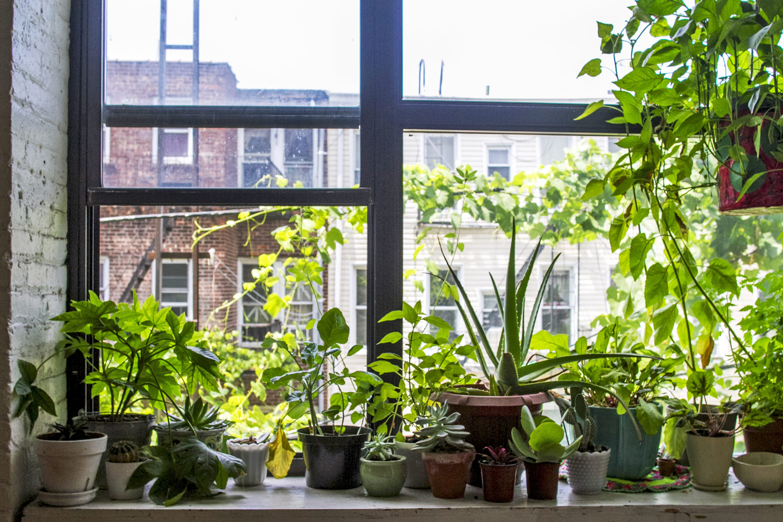 How to grow a lush garden in your tiny kitchen windowsill