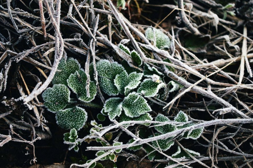 green plant growing through pile of frosted twigs