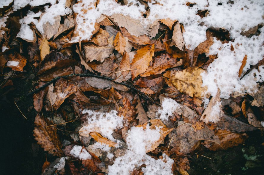 wet orange and brown leaves partially covered with snow