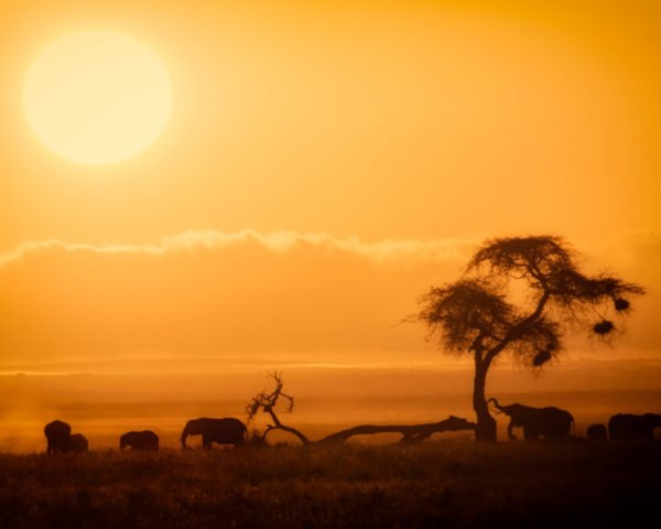 silhouette of elephants and a tree at sunset