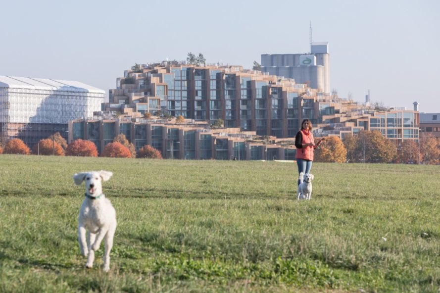 dogs playing in field in front of large apartment building