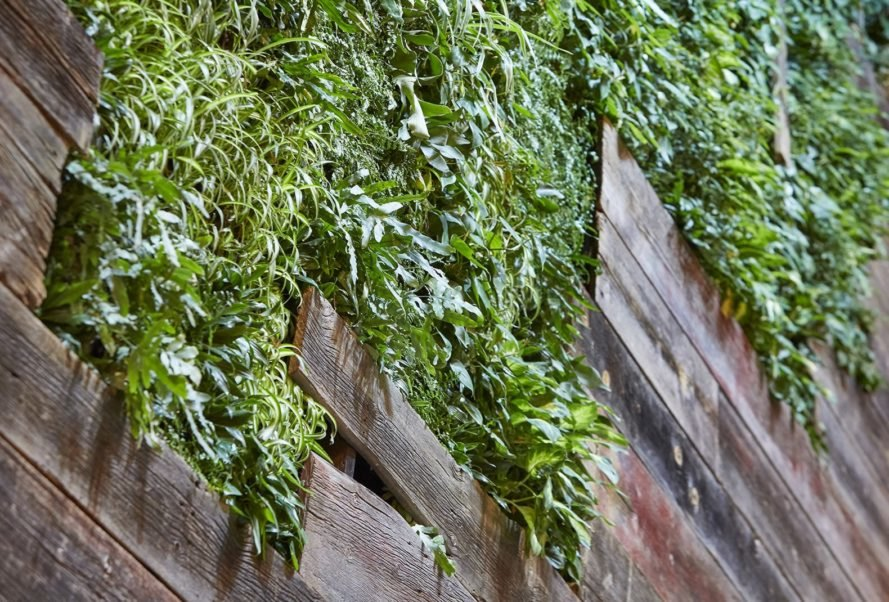 close-up of green wall