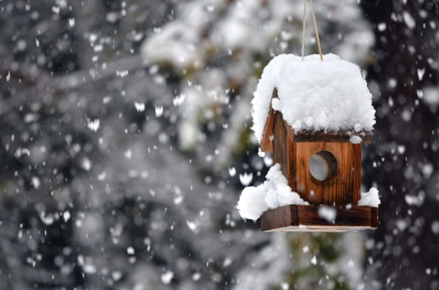 Wood birdhouse feeder covered in snow hanging from tree