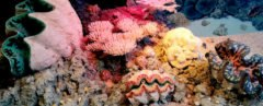 colorful coral reefs and sea shells underwater