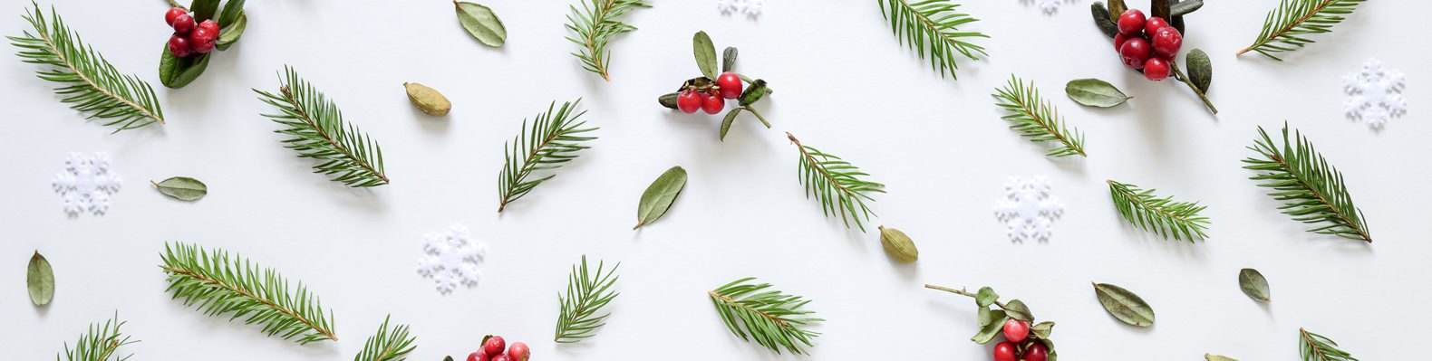 evergreen pines, winter berries and leaves on white background