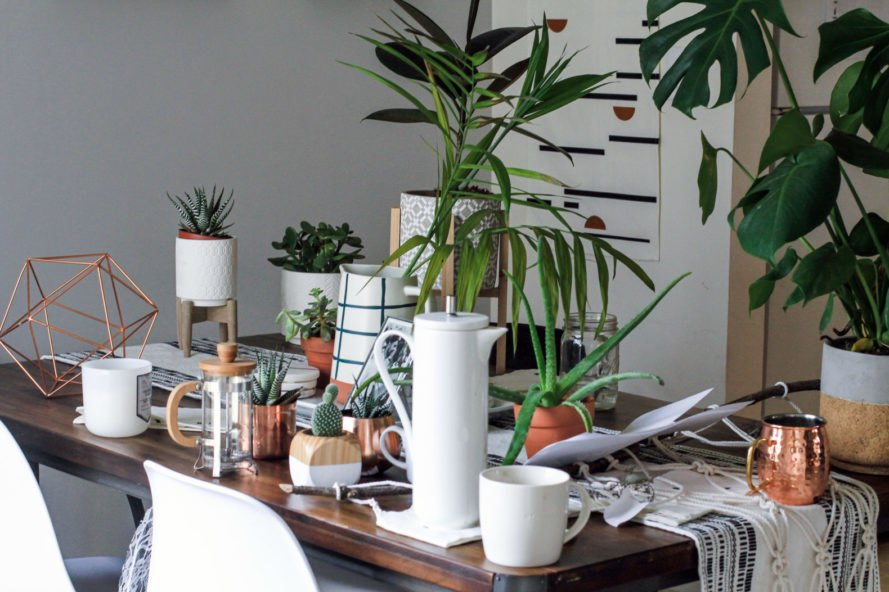 several plants in minimalist pots on a dining table