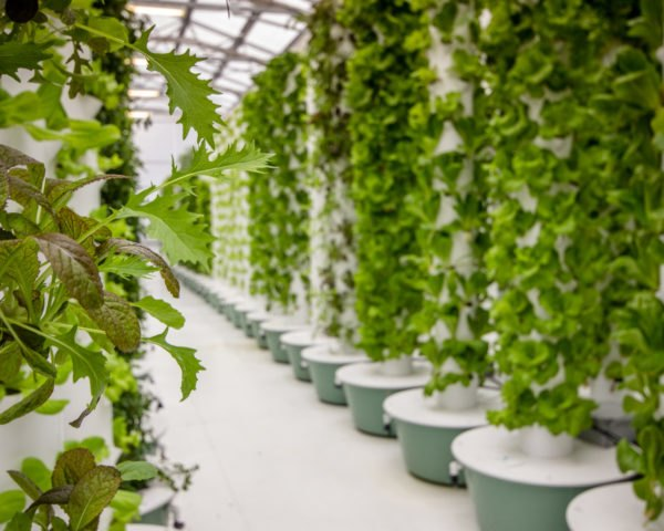plants growing from a aeroponic farming method