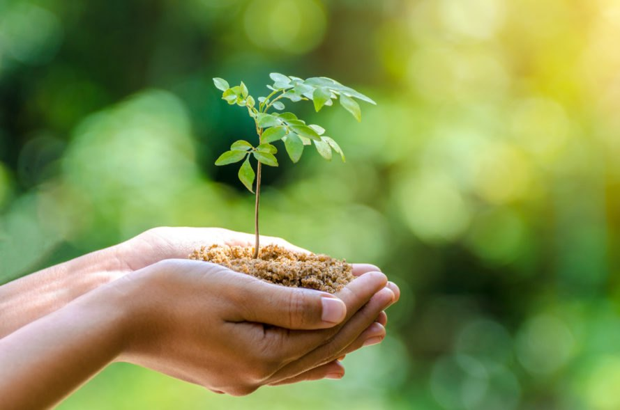 The Importance Of An Eco-Friendly Environment