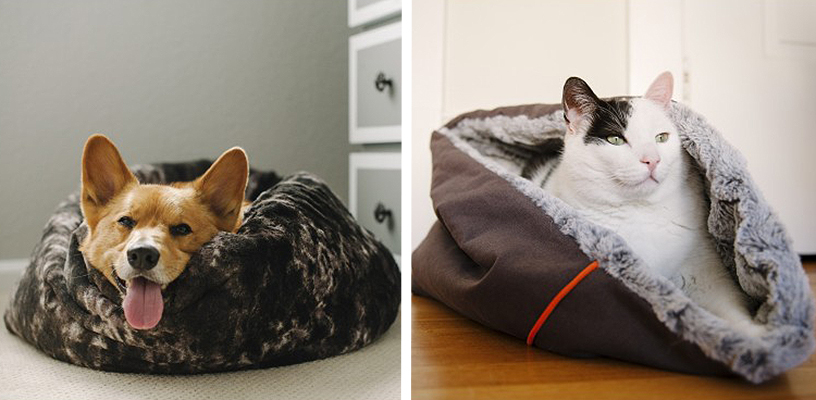 On the left, Corgi dog lying in a brown bed. On the right, black and white cat lying in a brown bed.