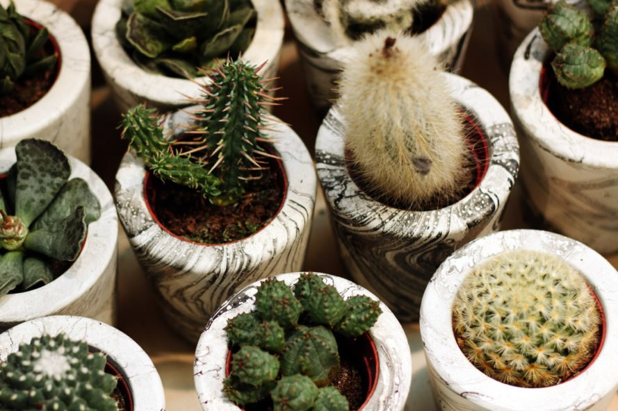 different types of succulents in marble pots