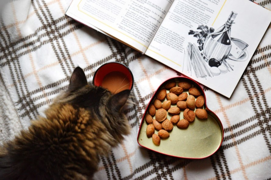 cat eating nuts in a heart-shaped dish