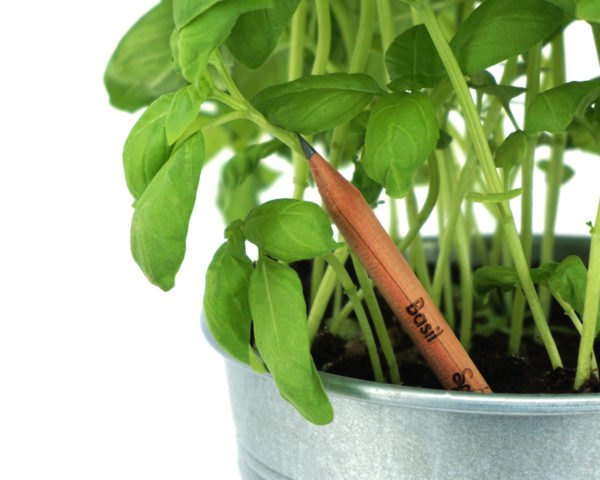 brown basil pencil inside a pot