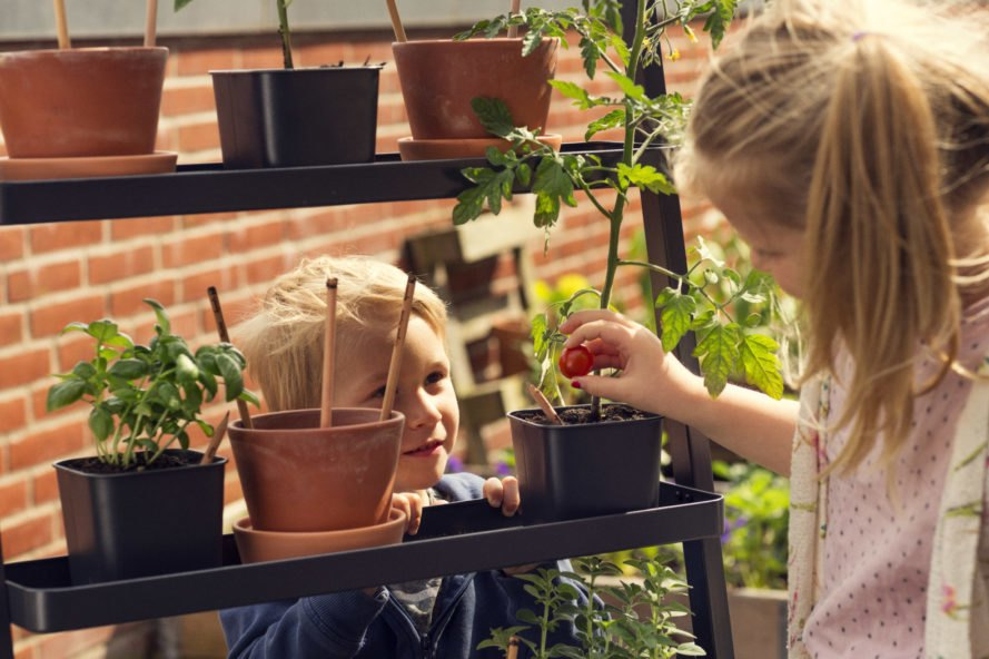 children planting the pencils next to sprouted plants and herbs