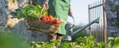 person holding basket full of vegetables in a garden