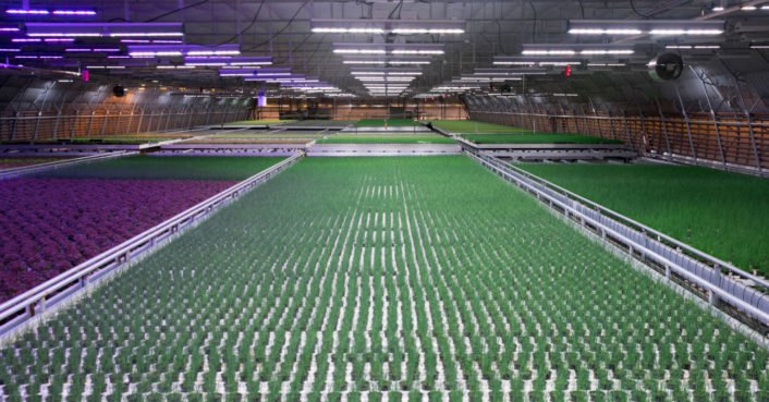 This high-tech LED lighting could grow veggies in space