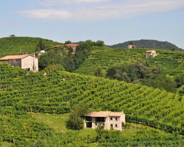 rolling green hills of a vineyard in Italy