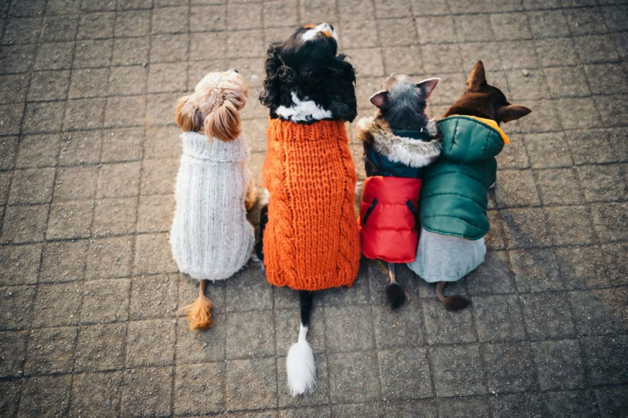four dogs wearing sweaters sitting with backs faced towards camera