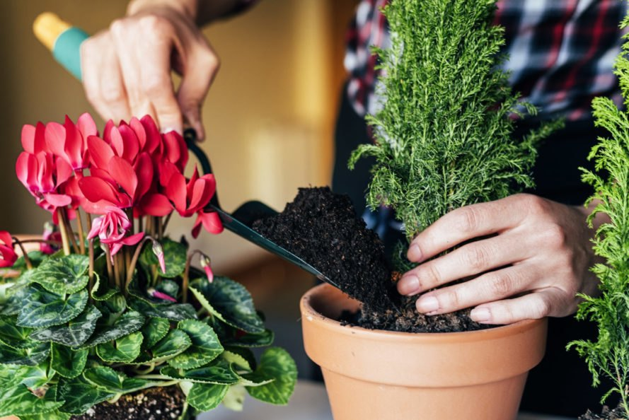 hand planting a plant in a pot