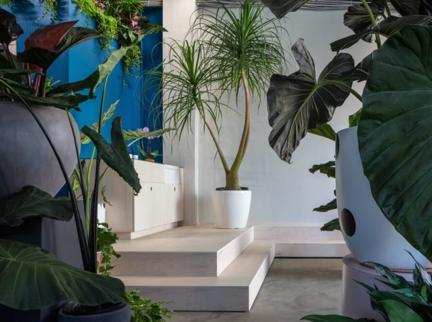white steps with potted plants