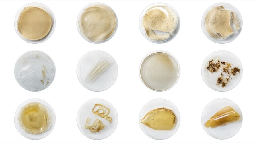 petri dishes of bioplastic materials