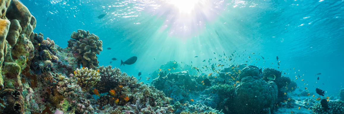 Can the Caymans save the Caribbean's remaining coral reefs?