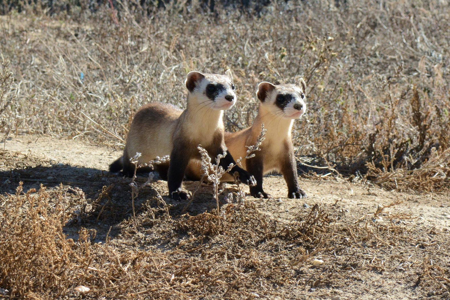 """Don't forget to fight for these """"less glamorous"""" endangered species"""