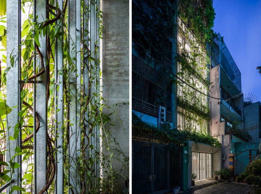 glass walls covered in creeping vines