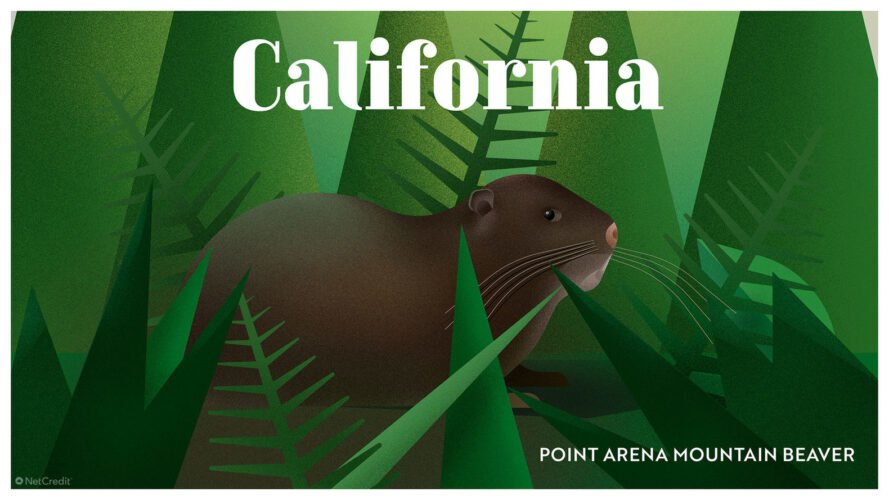 poster of Point Arena mountain beaver