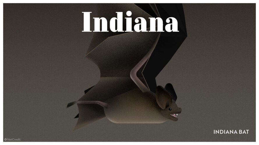poster of Indiana bat