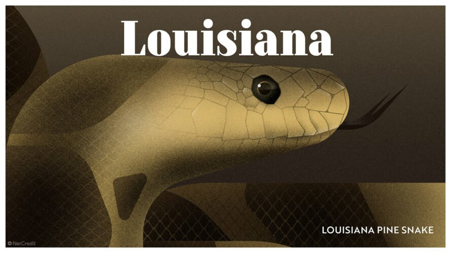 poster of Louisiana pine snake