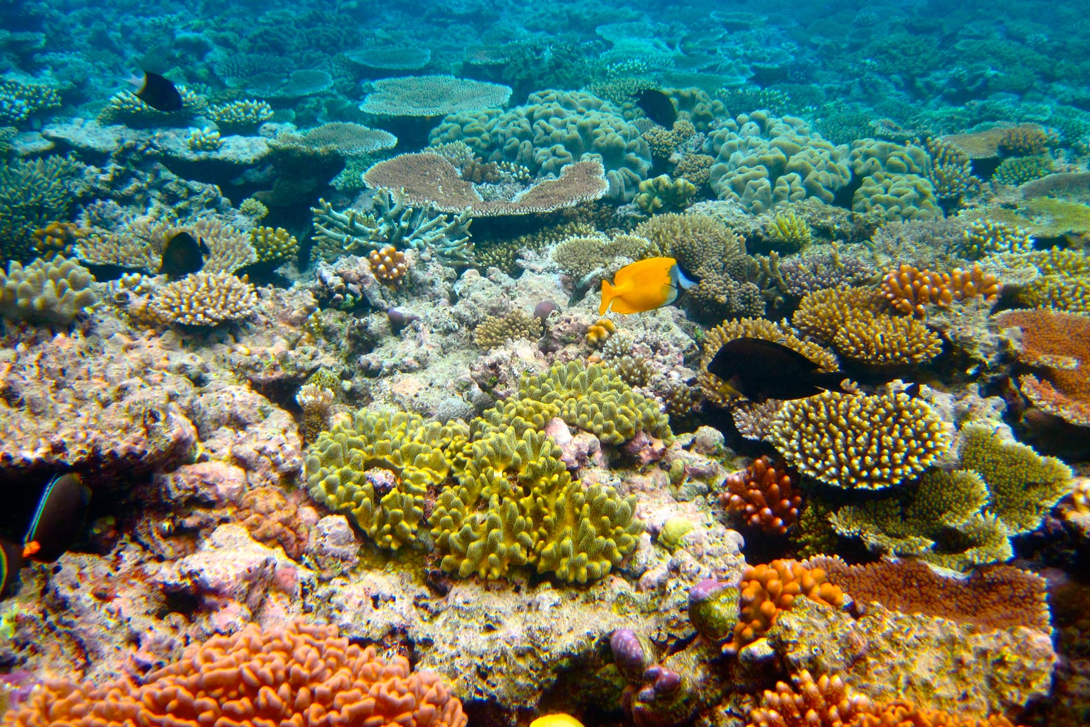 Loophole allows 1M tons of sludge to be dumped on Great Barrier Reef