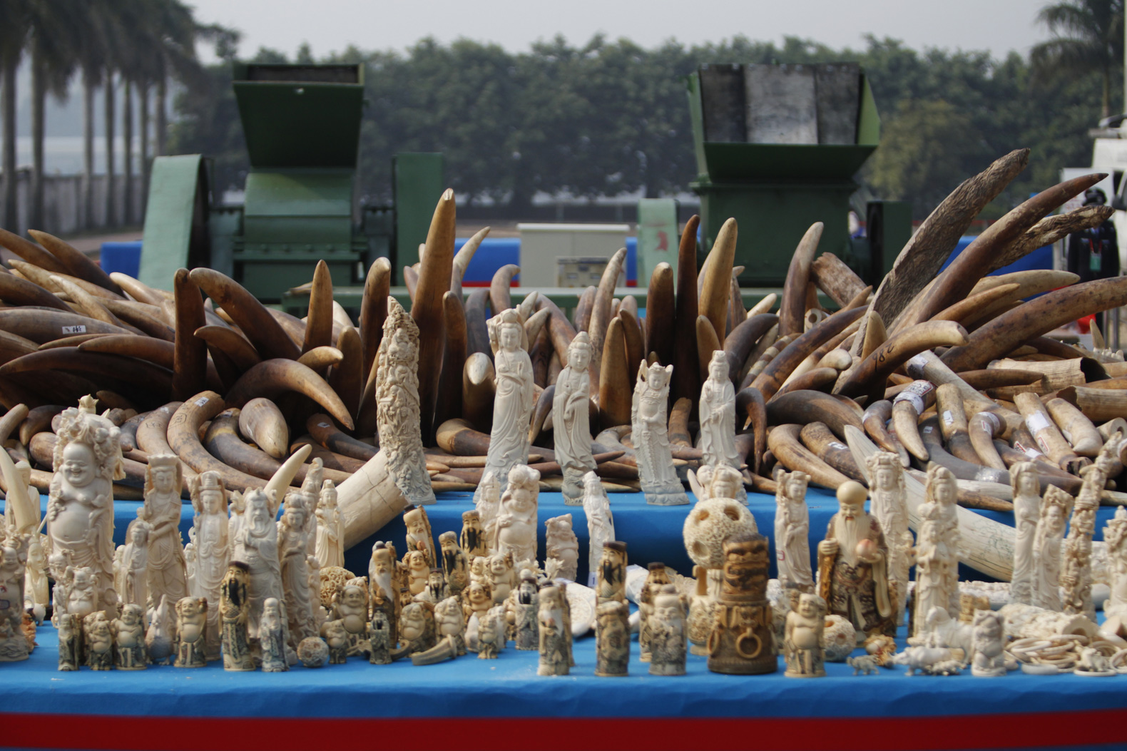 Ivory Queen sentenced to 15 years for illegal ivory smuggling