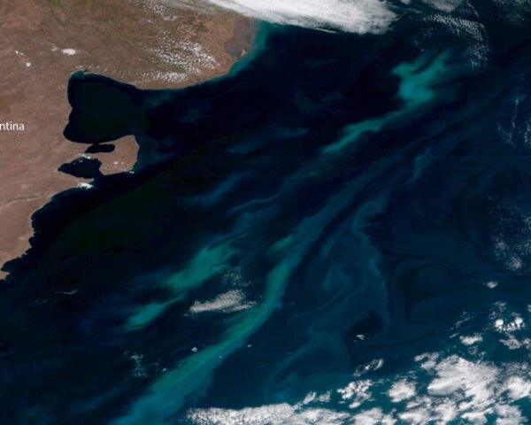 satellite image of phytoplankton in oceans off of Argentina